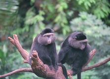 Monkeys. Two Monkeys stock photo