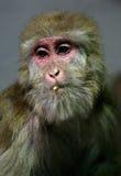 Monkeys Stock Photos