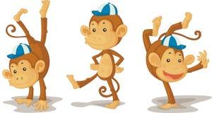 Free Monkeys Royalty Free Stock Photo - 8487675