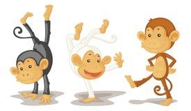 Monkeys. An illustration of three monkeys performing Stock Photography