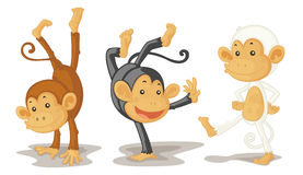 Monkeys. An illustration of three monkeys performing Royalty Free Stock Images