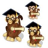 Monkeys in academic cap. Vector animal Royalty Free Stock Photography