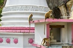 Monkeys in ancient temple in Mulkirigala, Sri Lanka Royalty Free Stock Photography