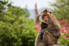 Monkeys animal. In to the wild Royalty Free Stock Images