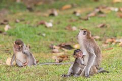 Monkeys baby Royalty Free Stock Images