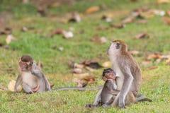 Monkeys baby. The monkey baby having breastfeeding Royalty Free Stock Images