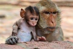 Bébé singe et sa mère. Un bébé singe et sa mère, photo prise à Lopburi en Thaïlande Stock Photos