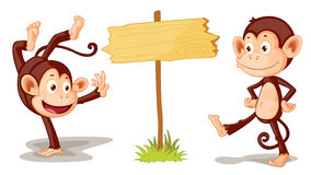 Monkeys with banner Royalty Free Stock Photo