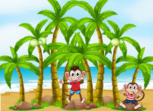 Monkeys at the beach with coconut trees Stock Photography