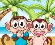 Monkeys at the beach Royalty Free Stock Photos