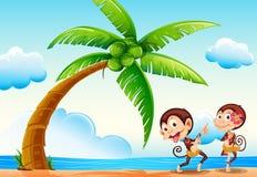 Monkeys and beach Stock Photos