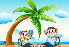 Monkeys and beach Royalty Free Stock Photos