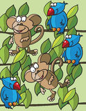 Monkeys and birds Stock Images
