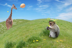 Monkeys birthday Royalty Free Stock Photo