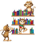 Monkeys and books Stock Photo