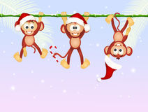 Monkeys celebrate Christmas Stock Photography