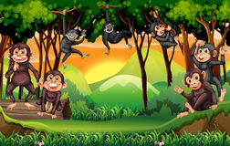 Monkeys climbing tree in the jungle Royalty Free Stock Images