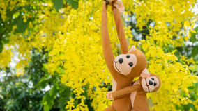 Monkeys climbing the tree Stock Photography