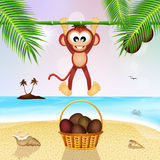 Monkeys and coconuts on the beach Stock Photos