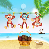 Monkeys and coconuts Royalty Free Stock Photos