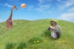 Monkeys cumpleaños Foto de archivo libre de regalías