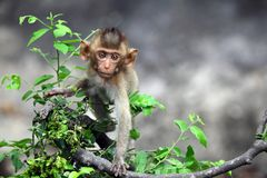 Monkeys cute on tree. stock photos