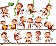 Monkeys Doing Different Actions Stock Image