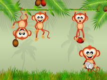 Monkeys eat the coconut Royalty Free Stock Images