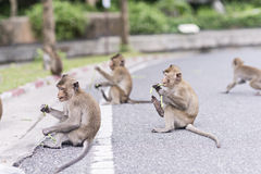 The monkeys are eating royalty free stock image