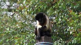 Monkeys Eating, Primates, Zoo Animals, Wildlife, Nature stock video