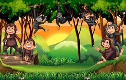 Monkeys el árbol que sube en la selva ilustración del vector