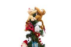 Monkeys el abrazo de las muñecas fotografía de archivo