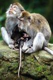 Monkeys Familie Lizenzfreie Stockfotos
