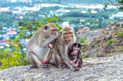 The monkeys family royalty free stock images