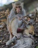 Monkeys family Royalty Free Stock Images