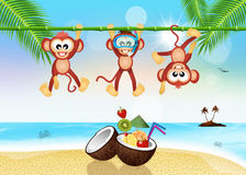 Monkeys with fresh cocktail in summer Royalty Free Stock Photography