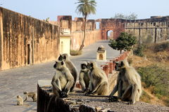 Monkeys Galore at Monument Royalty Free Stock Photography