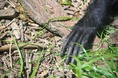 Monkeys hand Stock Image