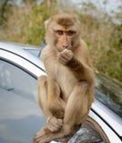 Monkeys i turisti di visita nel parco nazionale della Tailandia Fotografia Stock