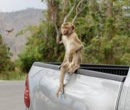 Monkeys i turisti di visita nel parco nazionale della Tailandia Fotografia Stock Libera da Diritti