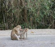 Monkeys i turisti di visita nel parco nazionale della Tailandia Immagini Stock