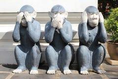 Monkeys il sensore Immagini Stock