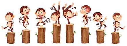 Monkeys Stock Photography