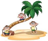 Monkeys. Illustration of monkeys and a tree Royalty Free Stock Image
