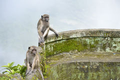 Monkeys in the jungle Stock Image