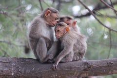Monkeys a la familia Imagen de archivo libre de regalías