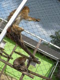 monkeys le zoo Images stock