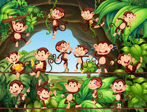 Monkeys living in the forest Royalty Free Stock Photo