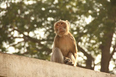 Monkeys living in the forest near the community Stock Images