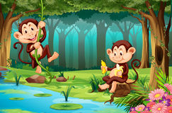 Monkeys living in the jungle Stock Images
